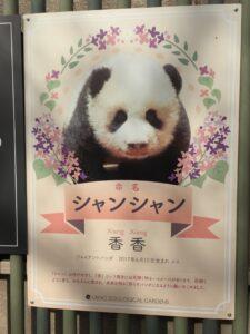 IMG 4010 225x300 - 上野のパンダ 〜20代★ガミースマイル 新宿・初台 岡歯科医院〜