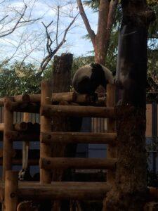 IMG 4032 225x300 - 上野のパンダ 〜20代★ガミースマイル 新宿・初台 岡歯科医院〜